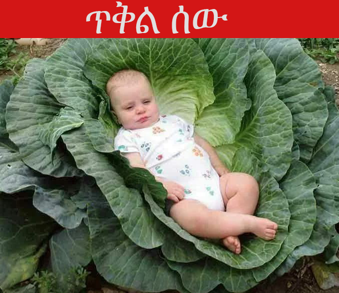 Funny Baby image - Top Ten Ethiopian Jokes that will make your day
