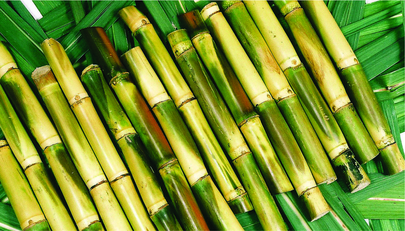Sugarcane 2 1 - The most memorable thing that you have done with 5 cents