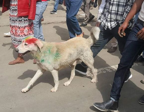 dog - The best message on Saturday's people demonstration to support Dr Abiy Ahemed