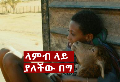 Capture - The Most Unforgettable non human characters in Ethiopian Movie