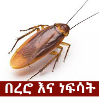Cockroach - The Most Common Phobia In Ethiopia