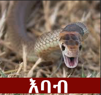 Snake - The Most Common Phobia In Ethiopia