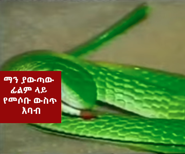 The Snake - The Most Unforgettable non human characters in Ethiopian Movie