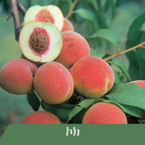 Peach 300x300 - Fruit tree you wish to have at home?