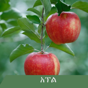 apple 300x300 - Fruit tree you wish to have at home?