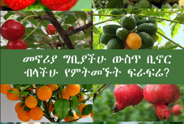 fruit you wish to have at home 370x250 - Fruit tree you wish to have at home?