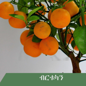 orange 300x300 - Fruit tree you wish to have at home?