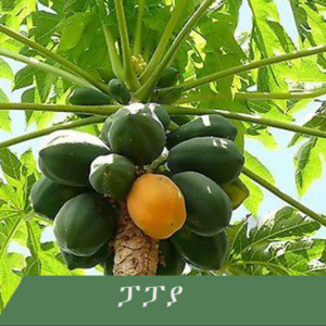 papaya 300x300 - Fruit tree you wish to have at home?